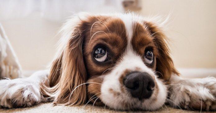 eccesso fosforo cane