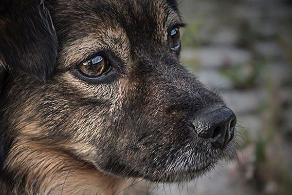 I cani vedono al buio oppure no? Ecco cosa sapere