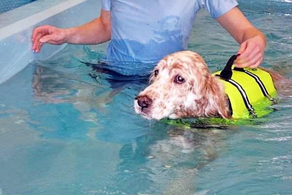 cane col giubbotto di salvataggio