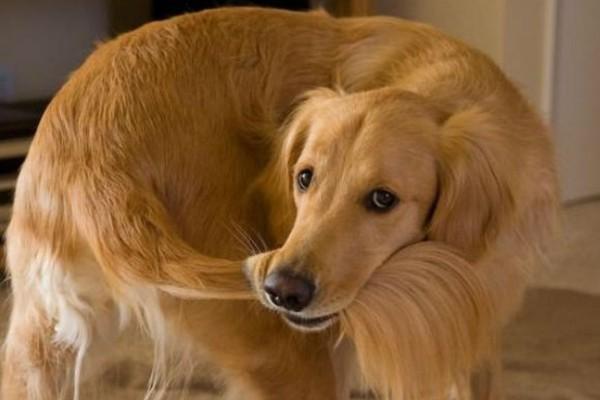 Igiene intima del cane: cosa sapere per una pulizia accurata