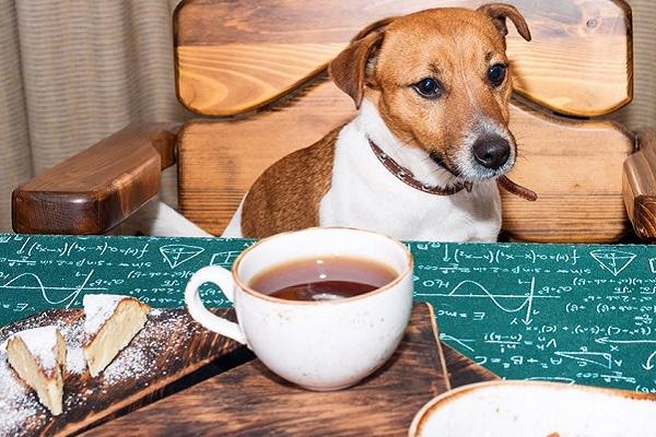 cane davanti a tazza di tè