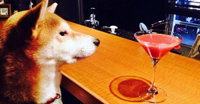 cane al bar