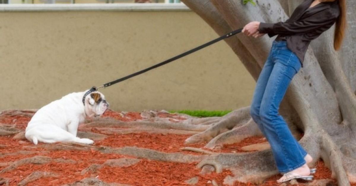 cane tirato al guinzaglio