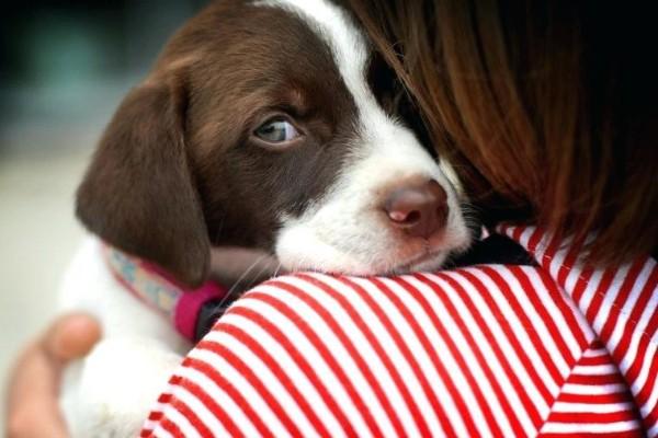 cane piccolo spaventato