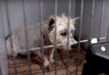 il-cane-viene-salvato-dopo-11-lunghi-anni-di-prigionia