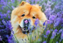 cane arancione tra i fiori