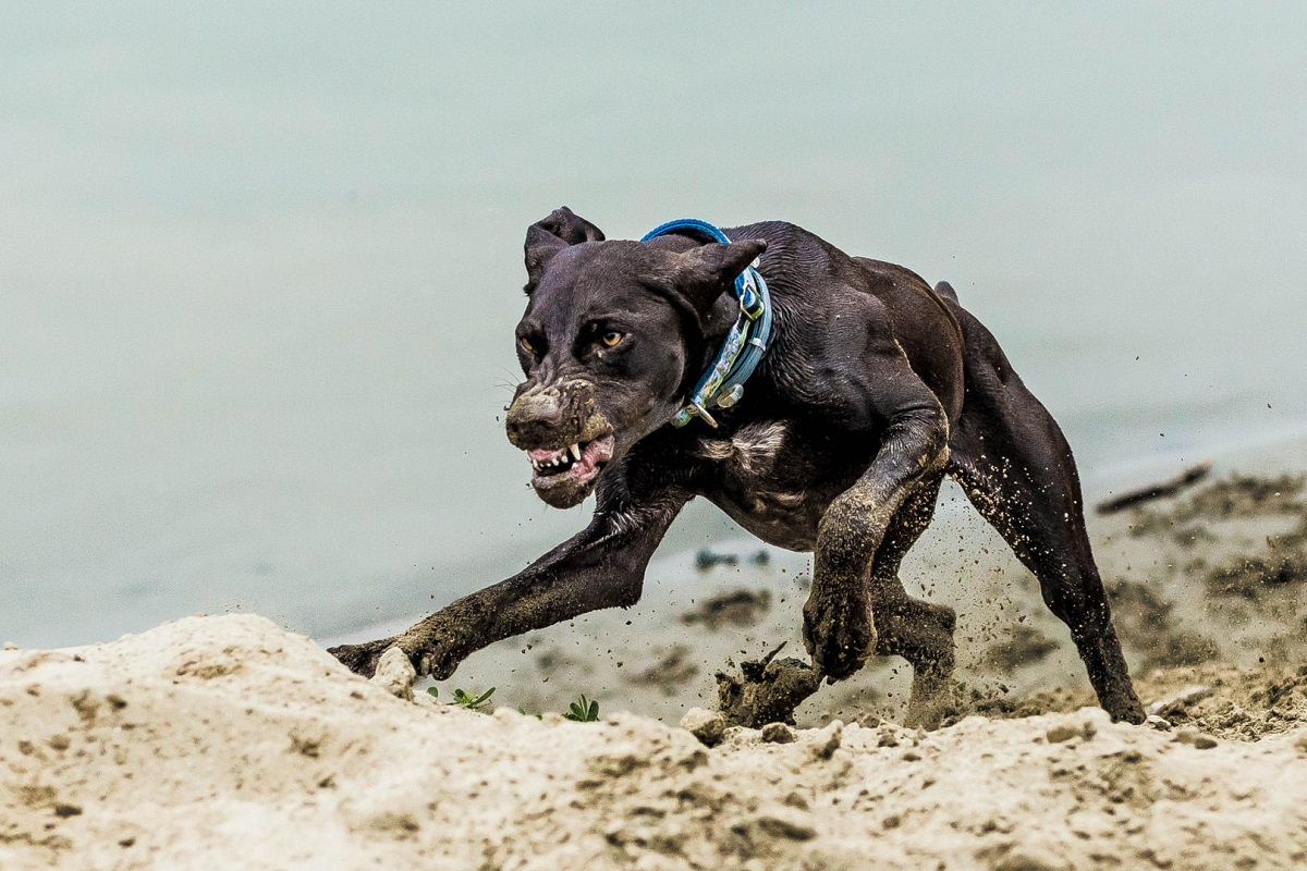 Il tuo cane è un bullo? Come puoi capirlo