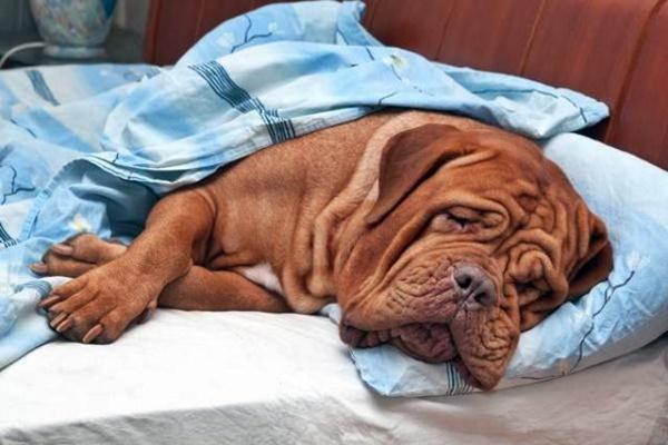 Inegy per cani: cos'è, a cosa serve e tutte le informazioni utili