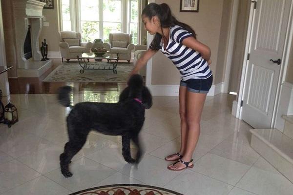 cane in allenamento