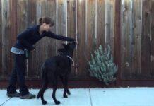 cane che si addestra