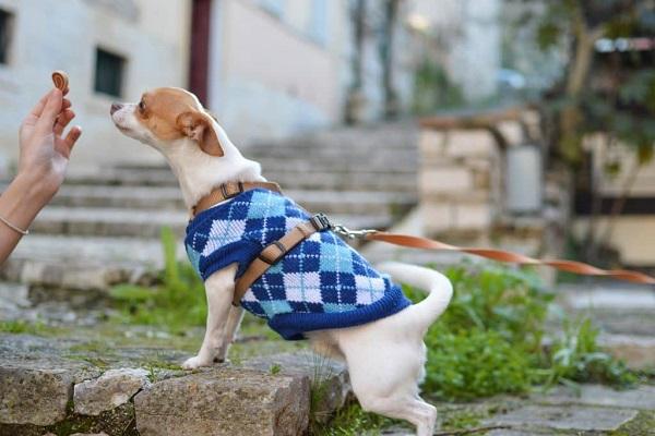 rinforzo positivo al cane