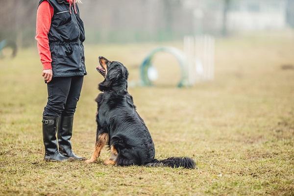 cane con allevatore