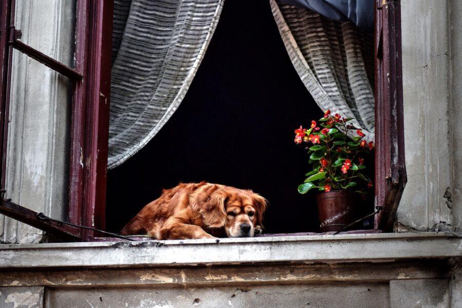 cane alla finestra aperta