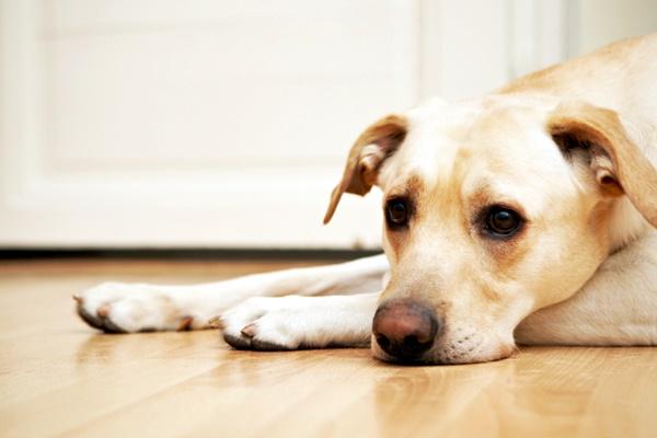 Interceptor per cani: cos'è questa medicina? A cosa serve?