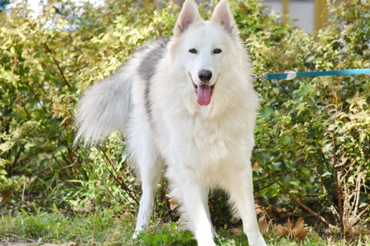 Intrattenere un cane annoiato: i metodi infallibili