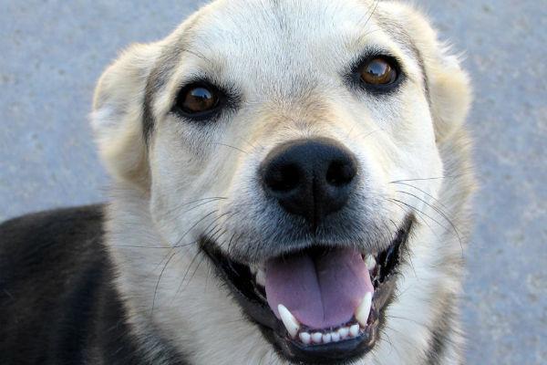 Ipocalcificazione dei denti del cane: tutto su questa condizione
