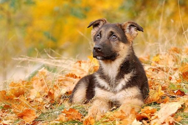 cane su tappeto di foglie