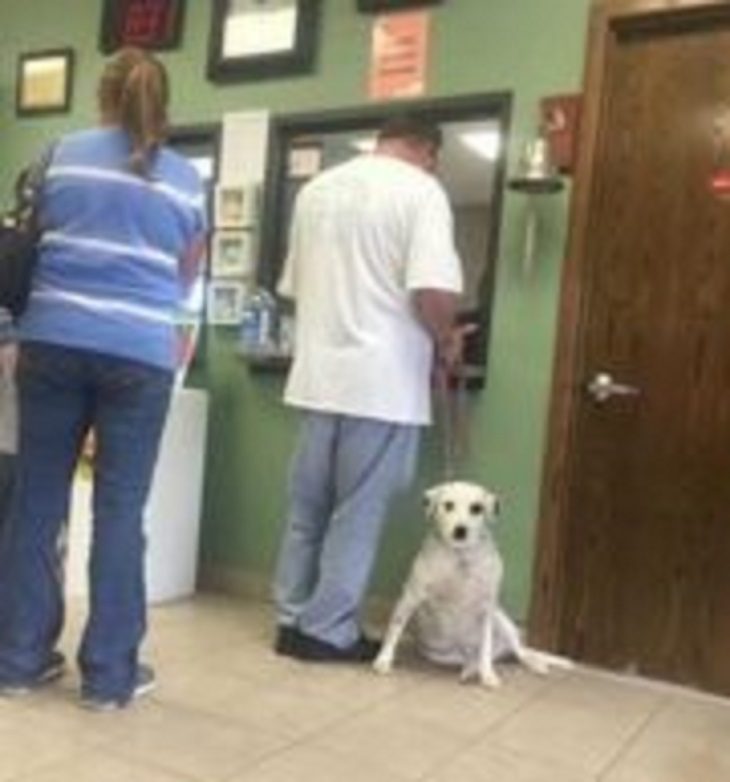 """Il cane viene restituito al rifugio perché troppo """"appiccicoso"""""""
