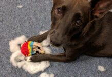 scegliere bene i giocattoli del cane