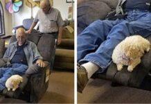 la-cagnolina-decide-per-il-nonno-quale-poltrona-comprare