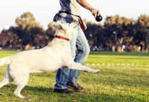 riprova addestramento cane