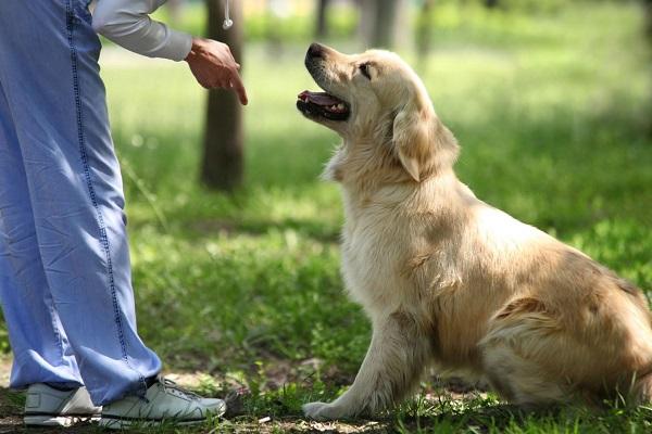 cane ascolta comando