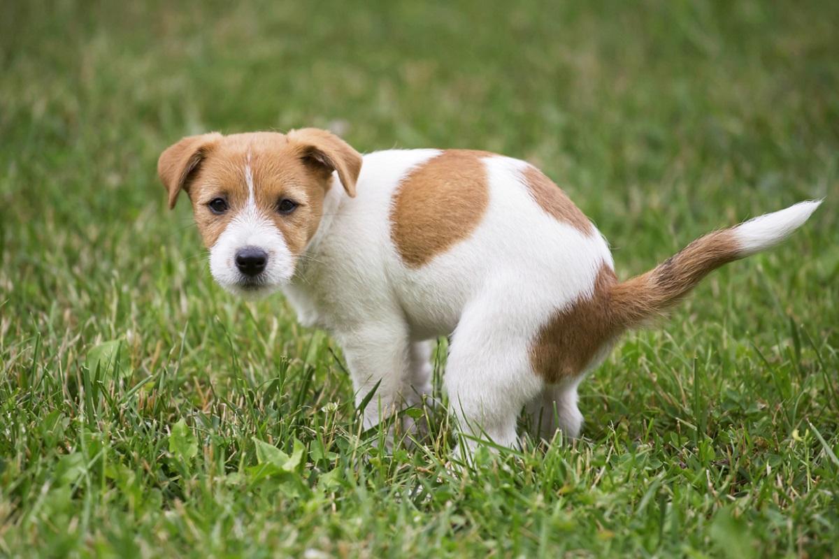 Lettiera per cani: esiste? Serve a Fido?