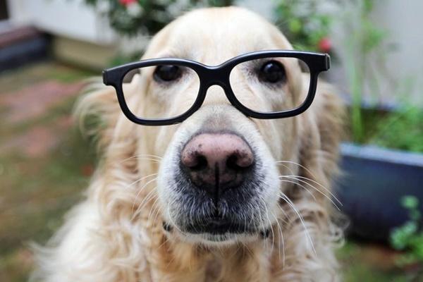 cane con gli occhiali