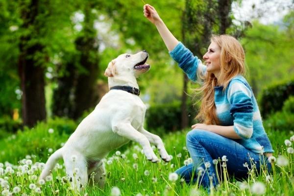 ragazza gioca col suo cane