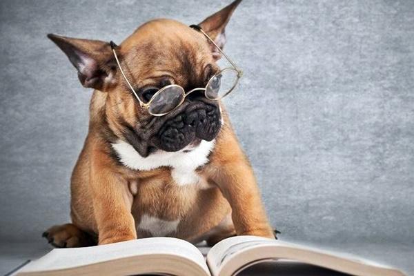 cane buffo che legge