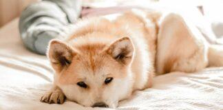 insegnare al cane a non dormire sul letto
