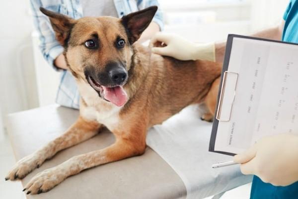 cane visitato dal veterinario