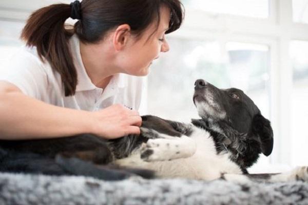 massaggio al cane