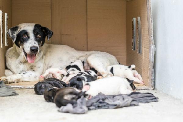 cane e figli