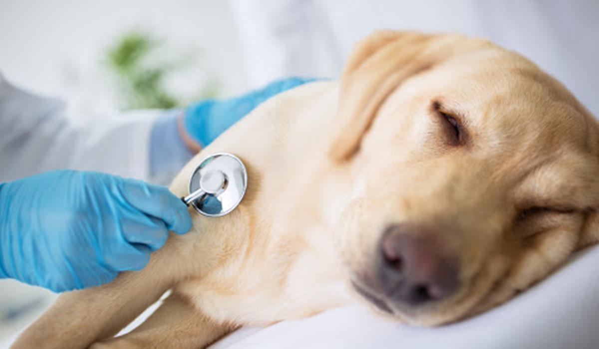 Medrol per cani: tutto quello che bisogna sapere su questa medicina
