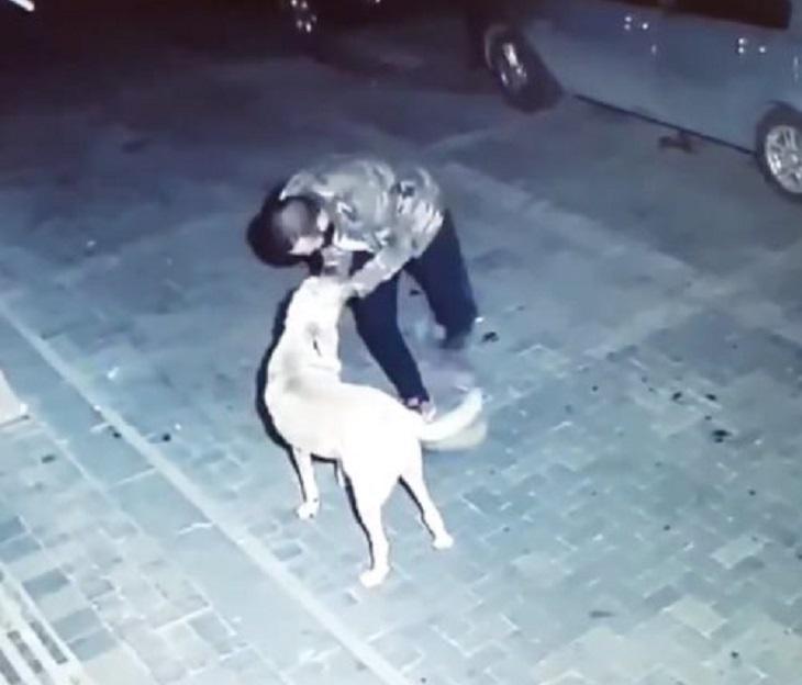metin-cane-notte