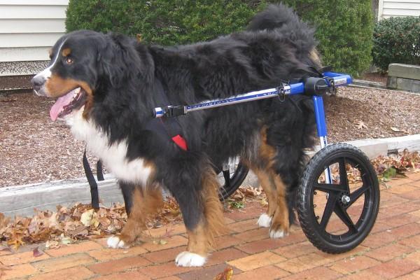 cane con carrello