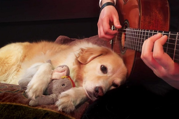 cane ascolta chitarra