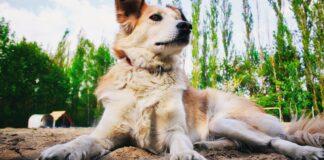 Il tuo cane ti salverebbe la vita? Scoprilo così