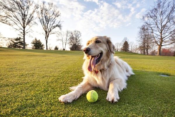 cane sul prato con la pallina