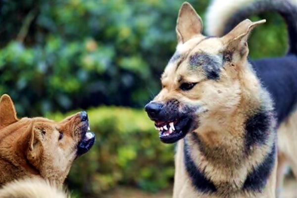 i cani riconoscono il colore della pelle
