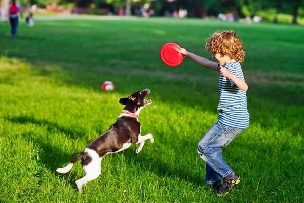 cane gioca con bambino