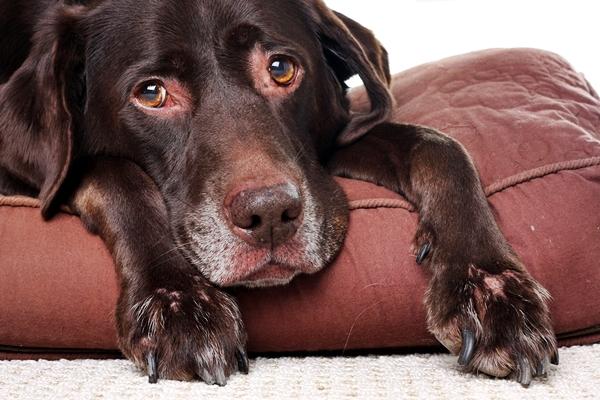 Omeopatia per il cane: funziona? Che rimedi esistono?