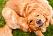 cane che si gratta