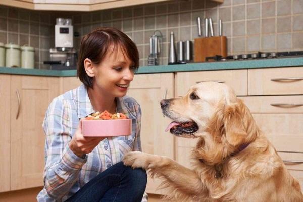 cane chiede cibo
