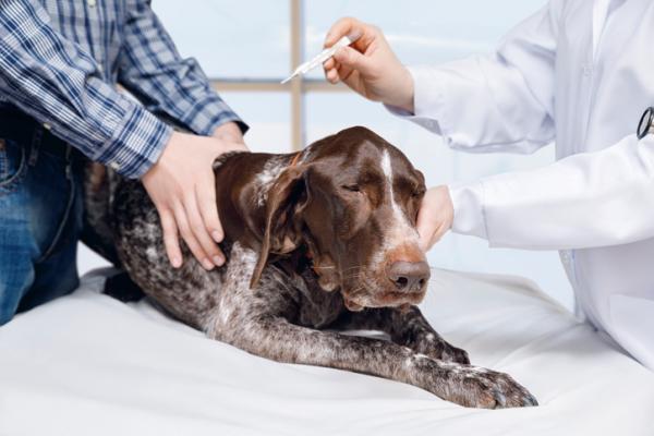 Perdita di equilibrio del cane: cosa significa? Che cosa fare?