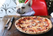 cane davanti a pizza