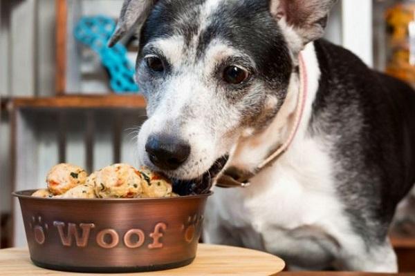 cane mangia polpette