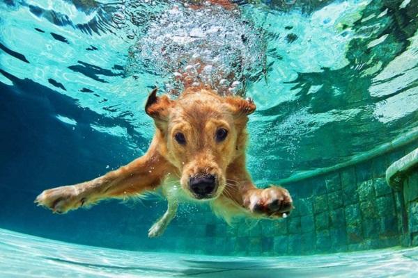 Razze di cani a bassa manutenzione: cosa (e quali) sono