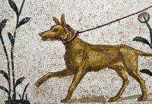 mosaico antico con cane